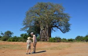 Lower Zambezi Lodge nature walks