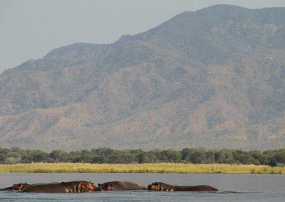 lower zambezi river views
