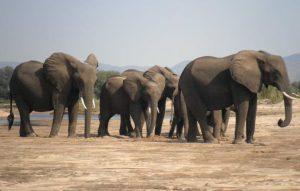 Elephant lower zambezi lodge