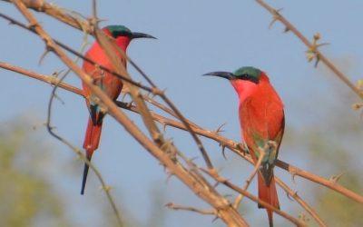 The Lower Zambezi – A Bird Lovers Paradise