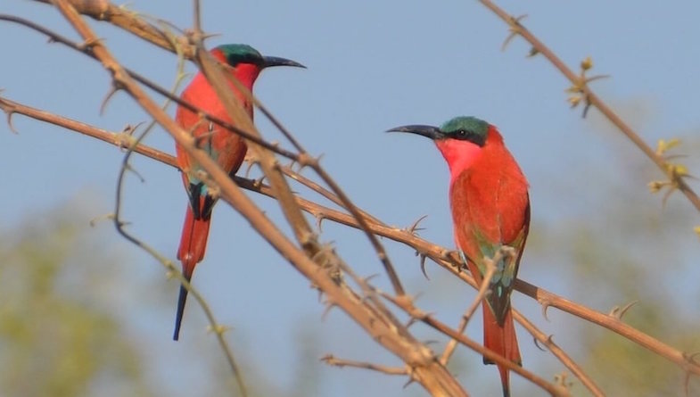 The Lower Zambezi – A Bird Lovers Paradise