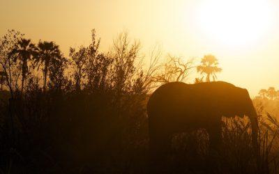 When to visit Zambia & the Lower Zambezi