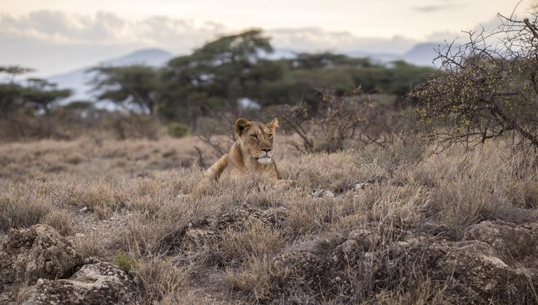 Lower Zambezi Wildlife